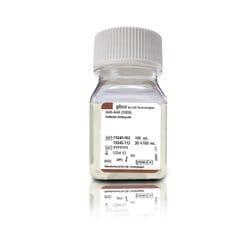 Antibiotic-Antimycotic (100X)