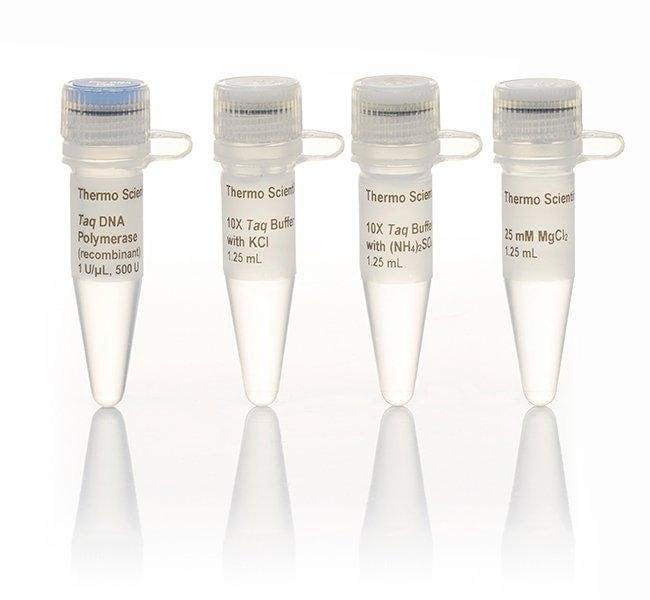 Taq DNA Polymerase, recombinant (1 U/µL)