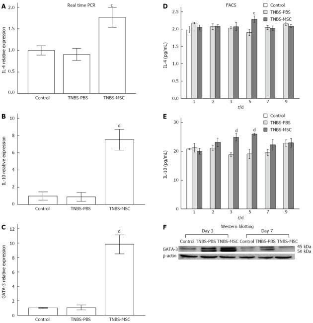 Gata-3 Antibody in Western Blot (WB)