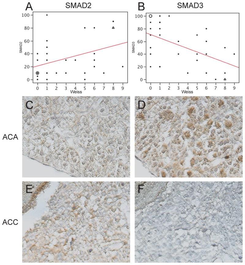 SMAD3 Antibody in Immunohistochemistry (IHC)